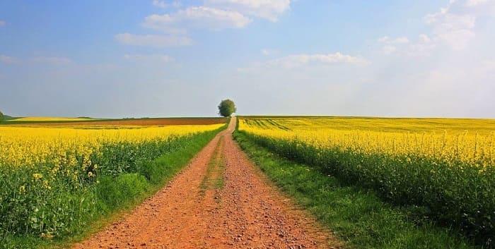 Невостребованность земель сельхозназначения